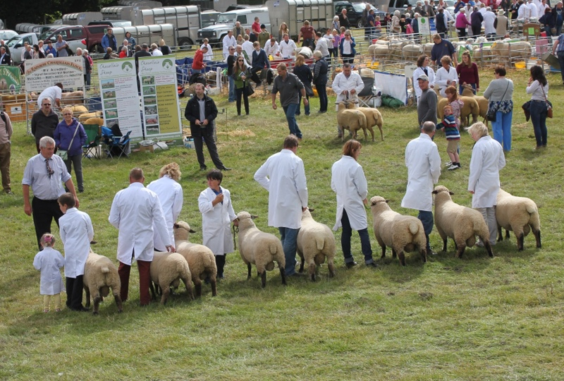 Oswestry-Show-judging